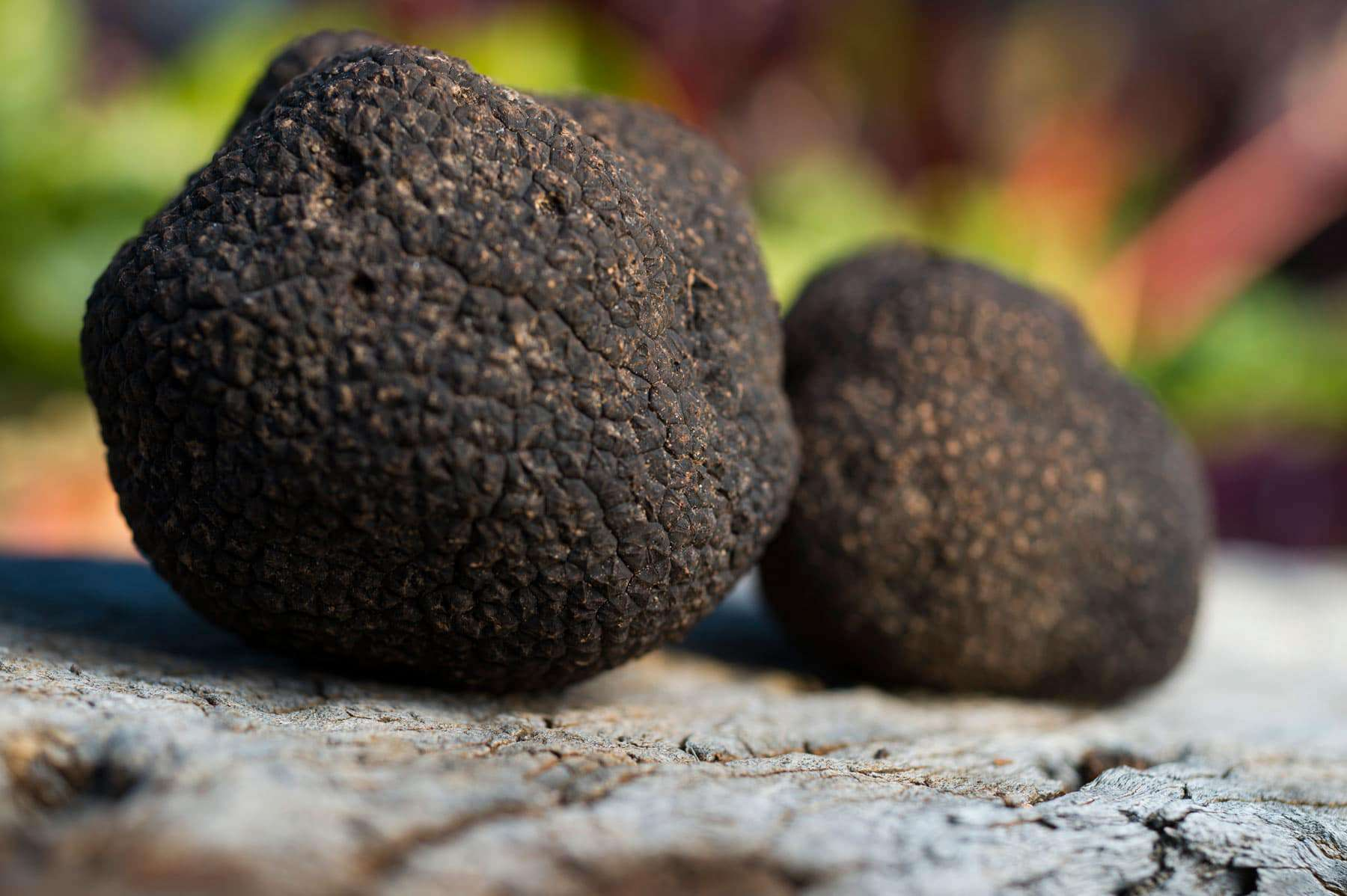 The star of the show – Fresh Canberra Black Winter Truffle.
