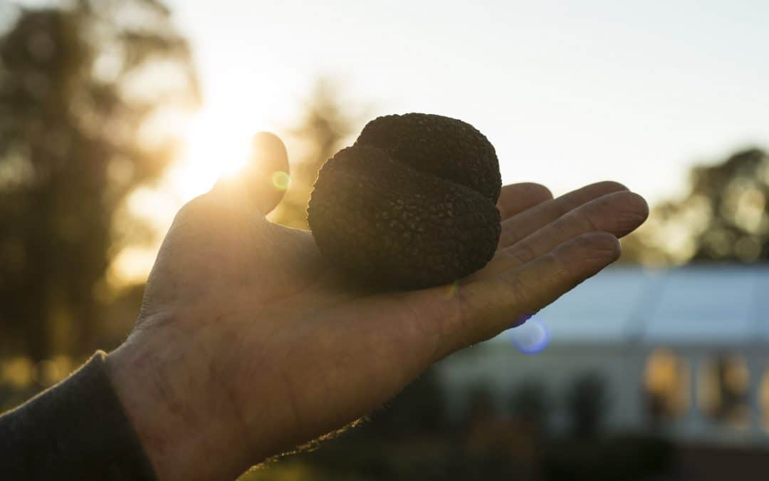 Truffle Festival- Canberra Region celebrates 10 years